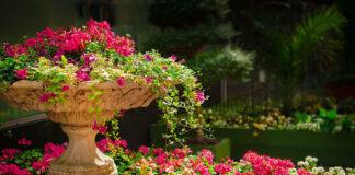 Porządki w ogrodzie